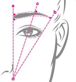 Brow-Diagram1